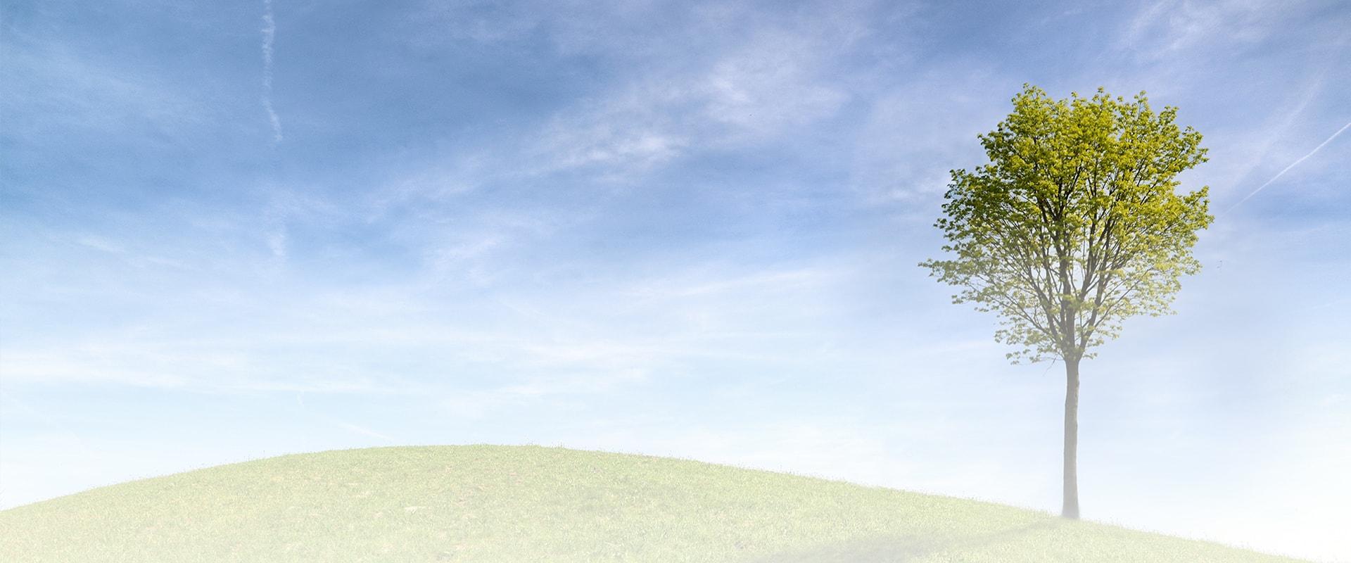 Árbol sobre montaña