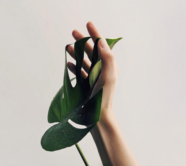 Mano y planta